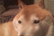 世界で一番有名な犬ってなに?