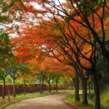 『【南千里・亥の子谷】 山田西公園、もみじのトンネル紅葉実況とバリアフリー事情』の画像