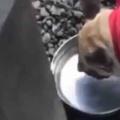 イヌが「ボウル」の水を飲んでいた。ちょっとクールダウンだワン♪ → こうなる…