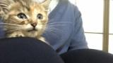 ワイが保護した子猫ちゃん、可愛すぎる(※画像あり)