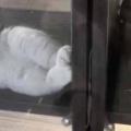 ネコがケースの中で寝転んでいた。うっふ~ん♪ → 猫はモデルになったようです…