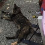 台湾の猫村に行ってきたからぬこ写真うp