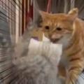 2匹の子ネコに猫が近づいた。威嚇する。何をするだァーッ! → お巡りさんがやってきた…