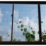 『みどりのカーテン』の画像