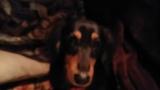 ワイ将のイッヌ、保護したヌコとご対面(※画像あり)