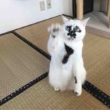 『9月29日は招き猫の日』の画像