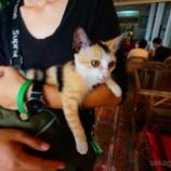『カンボジア シェムリアップで日本人宿巡り & 猫巡り』の画像