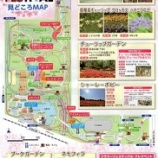 『国立昭和記念公園のチュ-リップ』の画像
