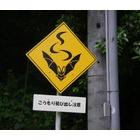 『いきものの速度』の画像