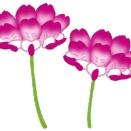 第2049日 「テーブルの薔薇」 と 「野に咲くレンゲソウ」 についての一考察
