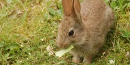 [画像]子ウサギ画像貼っていく