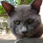 ノラ猫ファミリー  子育てblog
