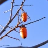 『【風習】木守りの柿の実に宿る邪神』の画像
