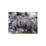 『霜柱』の画像