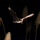 『採餌飛翔』の画像