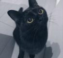 言葉では表現しきれないほどの可愛さを放つ黒猫