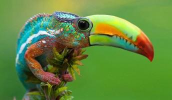 世にも奇妙なハイブリットな動物たちの画像特集