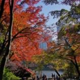 『紅葉狩り 小石川後楽園 2』の画像