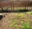 【画像あり】ワイドカタ、庭に畑作ったったwww