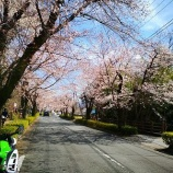 『Ninja250で長瀞の桜を観に行ってきた ソロツー26』の画像