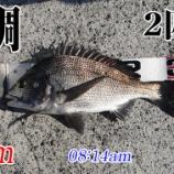 『今回こそ釣るぞ!柳井市の黒鯛(チヌ)釣り #045』の画像