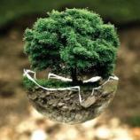 『純粋理性の復活と地球の蘇生:セバスチャン・サルガド』の画像