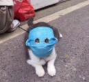 マスク猫あらわる 北京