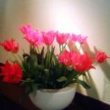 『咲いた』の画像