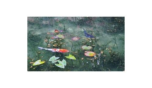 「モネの池」(岐阜県関市)の美しさに海外感動「魚のワンダーランド」「完璧な色彩」