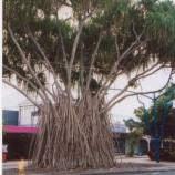 『オーストラリア ケアンズ旅行記3 コロニアルクラブリゾートホテルに宿泊』の画像