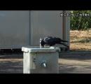 【かしこいカラス】公園で水道の栓を回して水飲むカラスが見つかる・・・水量調節も 横浜
