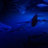 『美ら海水族館2』の画像