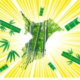 『実は「竹林県」だった千葉県  森林にしめる割合では全国2位』の画像