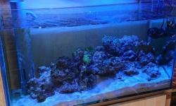 海水魚水槽完成したったwwwwwwww