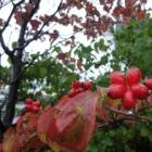 『ちょっと秋。』の画像