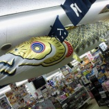 『お店の中を泳ぐこいのぼり』の画像