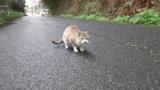 【画像】田舎道歩いてたら子猫を見つけたぞwwwwwwww