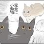 猫の動きが猫っぽくない