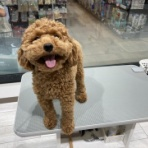 ペットショップワンラブ カインズ浜松市野店のスタッフブログ