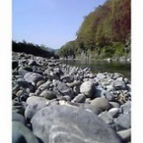 『石ころだらけ』の画像