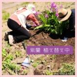 『お花の植え替え 「集中してんだすけ」』の画像