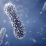 『大空の納豆菌』の画像