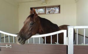 馬の餌やり体験を「再開します~!」