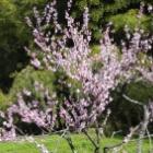 『里山の春 大江高山』の画像