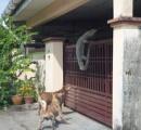 沖縄の畑に体長1メートルのイグアナらしき生物出現 警察が捕獲しようとするも逃走