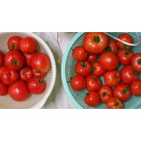 『【家庭菜園】雨のおかげで水やりは必要ないモノの… 蒸し暑さは、続く。トマトの収穫がピーク。』の画像