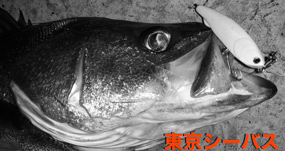 東京シーバス イメージ画像