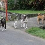 公園で放し飼いされてた犬を蹴り飛ばしたら飼い主が発狂しててワロタwww