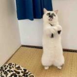 『猫踊りの振り付け』の画像
