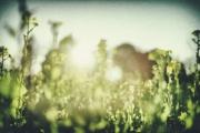 生物(植物)と環境の関係を理解しよう!~東京大学 生物環境工学研究室の紹介~